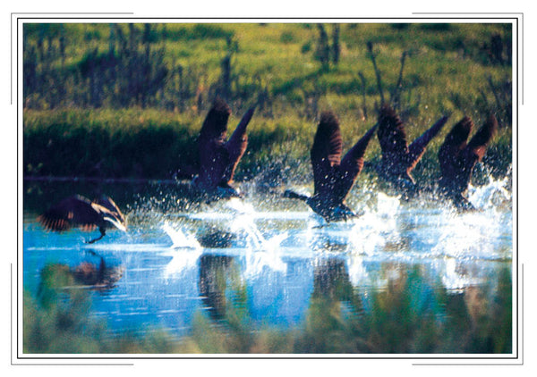 2020 Wildlife Pocket Calendar