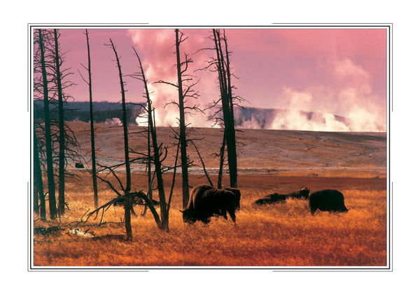 2018 Yellowstone Pocket Calendar