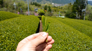 Discovering loose leaf tea in Taiwan - slide show 4