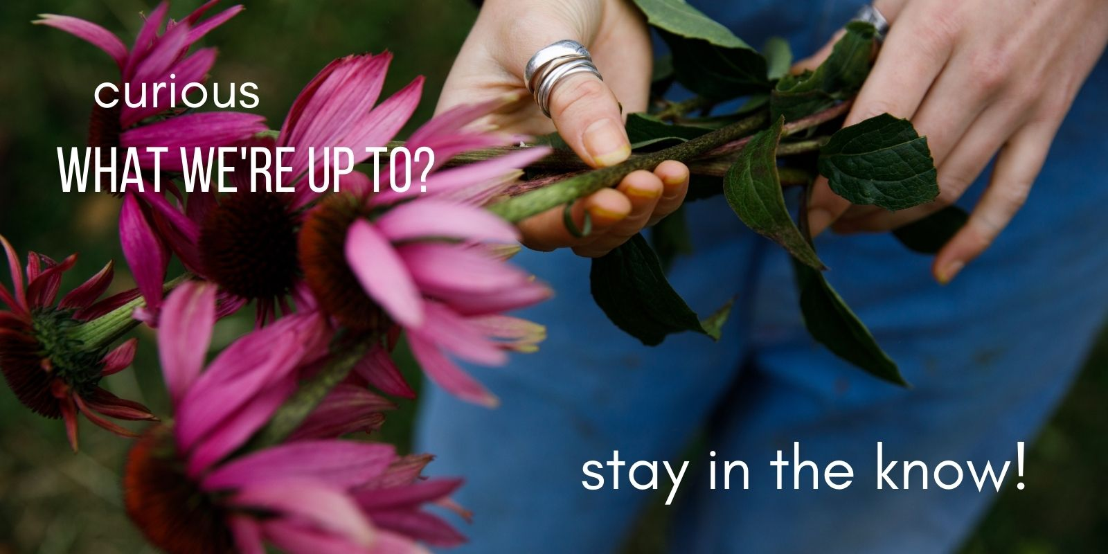 Curious what we're up to at Herbal Revolution? Join our newsletter to stay in the know!