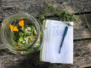 6 Month Botanical Exploration in Maine - Herbalrevolution