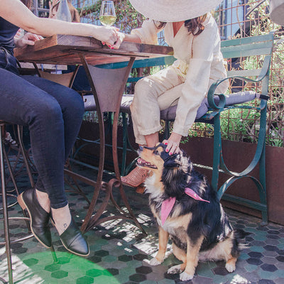 Pet Friendly LA Spots to Take Your Little Valentine