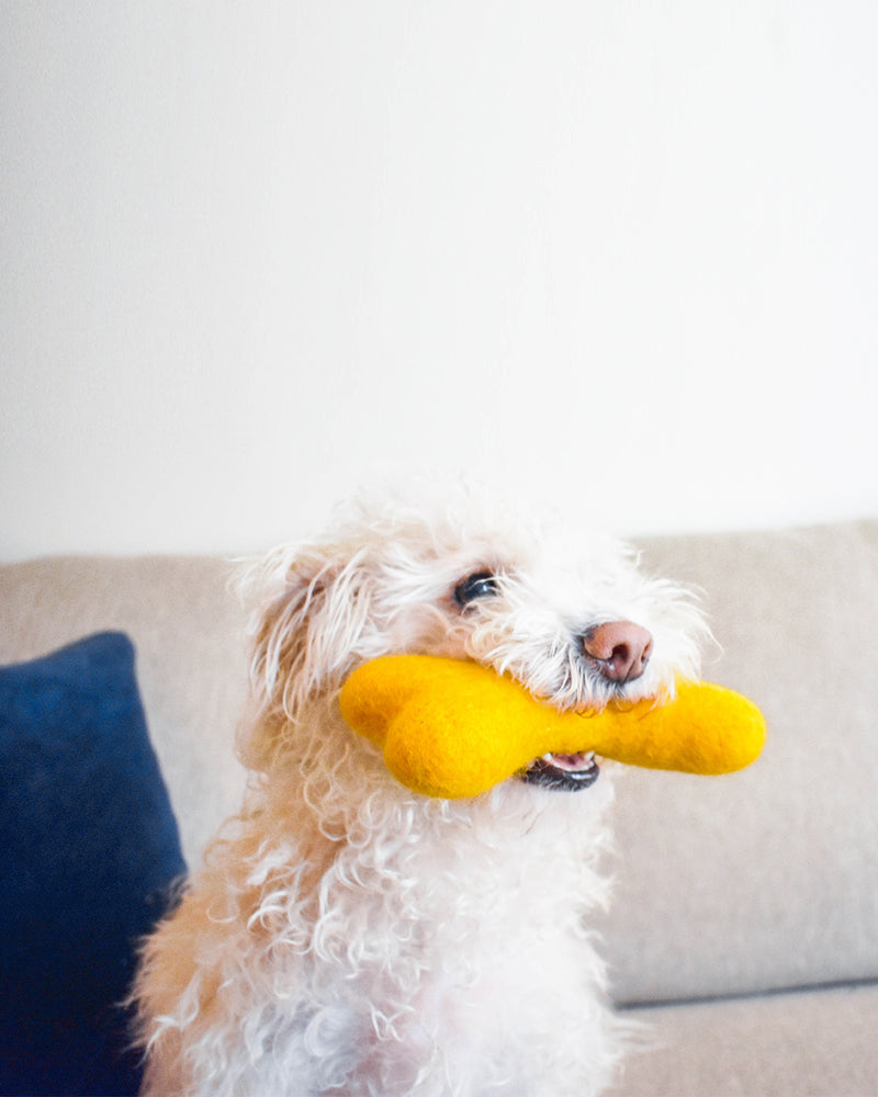 DOG BONE MADE OF 100% ORGANIC WOOL FELT DENSELY PACKED. ECO FRIENDLY. DURABLE. SMALL AND LARGE. YELLOW HELD BY WHITE FLUFFY DOG.