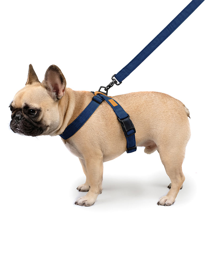 FIELD X-HARNESS BY CHARLIE'S BACKYARD. NNAVY CORDUROY AND ADJUSTABLE. FEATURED ON A FRENCH BULLDOG.