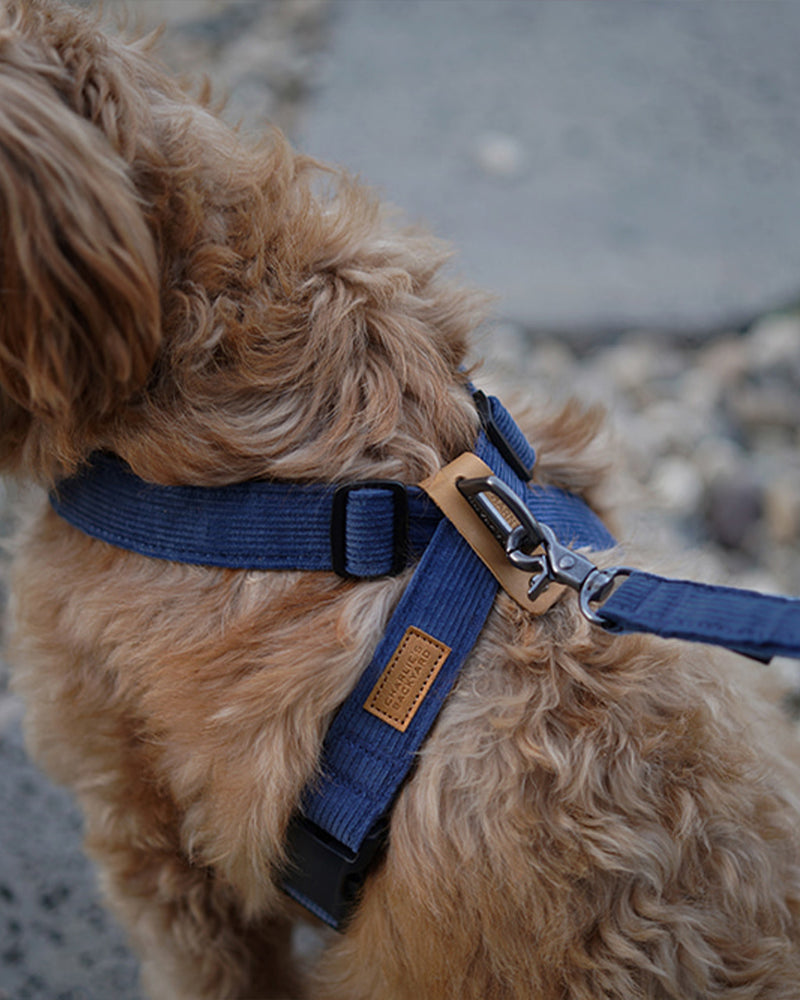 FIELD X-HARNESS BY CHARLIE'S BACKYARD. NAVY CORDUROY AND ADJUSTABLE. FEATURED ON A BULLDOG.