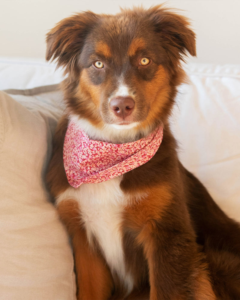 Pink floral bandana for cats and dogs. pre-folded and offers longer ends to perfectly and easily tie. 100% Cotton. Bandana on Aussie mix