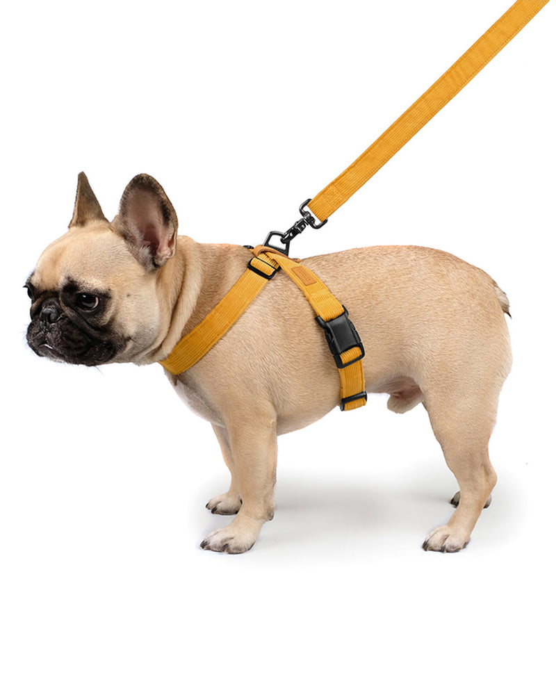 FIELD X-HARNESS BY CHARLIE'S BACKYARD. YELLOW CORDUROY AND ADJUSTABLE. FEATURED ON A FRENCH BULLDOG.
