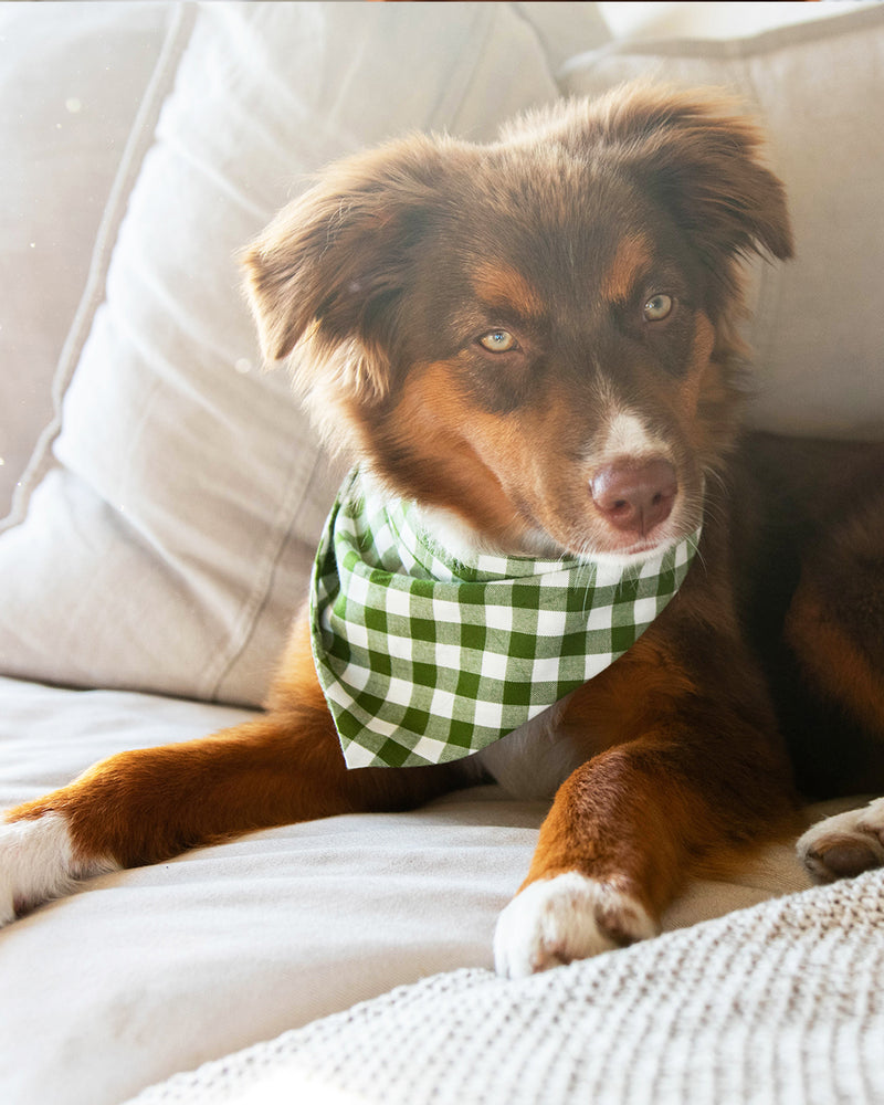 Dark green gingham bandana for cats and dogs. pre-folded and offers longer ends to perfectly and easily tie. 100% Cotton. Bandana on Aussie mix