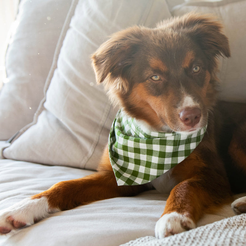 Dark green gingham bandana for cats and dogs. pre-folded and offers longer ends to perfectly and easily tie. 100% Cotton