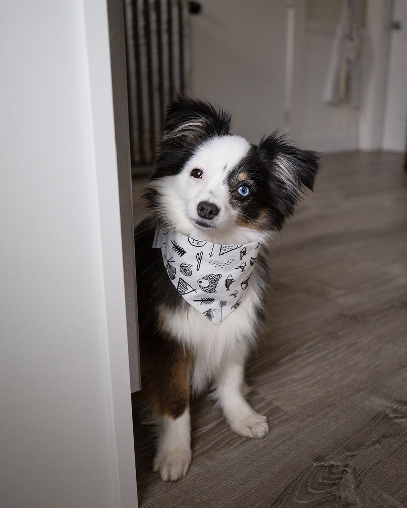 Camping print bandana for cats and dogs. pre-folded and offers longer ends to perfectly and easily tie. 100% Cotton. Bandana on mini Australian Shepherd.