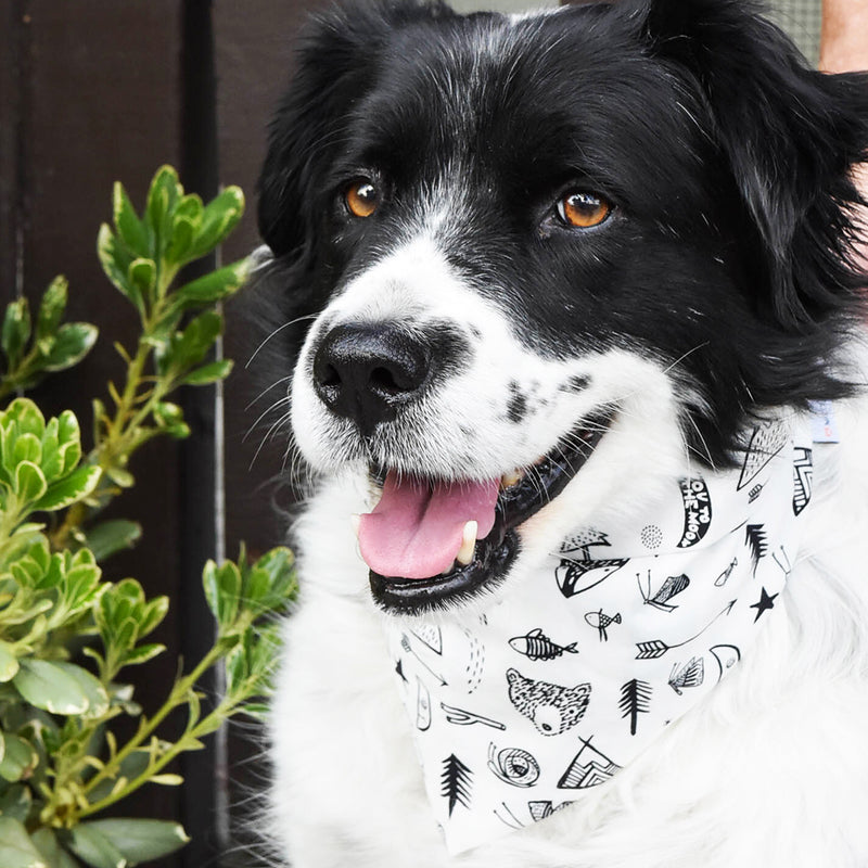 Camping print bandana for cats and dogs. pre-folded and offers longer ends to perfectly and easily tie. 100% Cotton