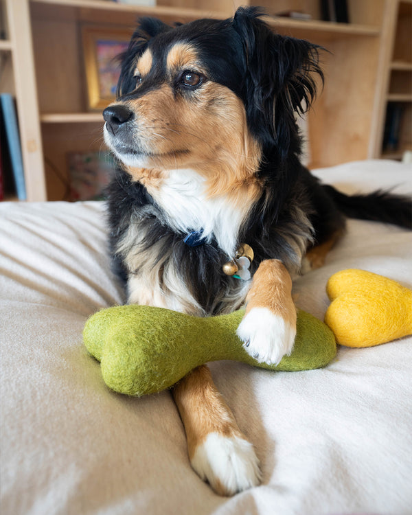 DOG BONE MADE OF 100% ORGANIC WOOL FELT DENSELY PACKED. ECO FRIENDLY. DURABLE. SMALL AND LARGE. GREEN AND YELLOW HELD BY AUSSIE MIX.