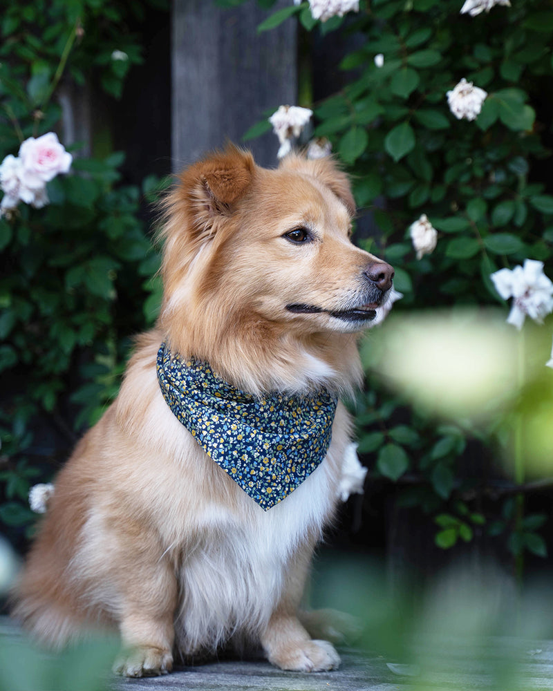 Dark blue floral bandana for cats and dogs. pre-folded and offers longer ends to perfectly and easily tie. 100% Cotton
