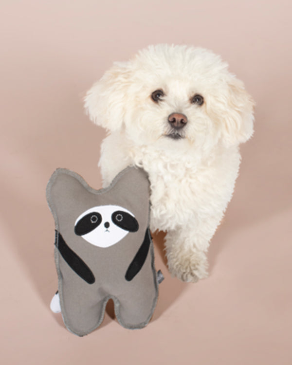 FRINGE CANVAS RACCOON DOG TOY. GREY, BLACK, WHITE RACCOON WITH SQUEAKER FOR DOG. PICTURED WITH SMALL WHITE DOG.