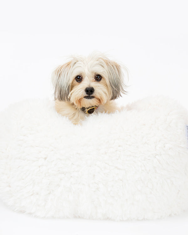 A Shih Tzu is lying in a dog bed. The Dog bed is in white soft material, available in small and large sizes and made out of recycled materials.