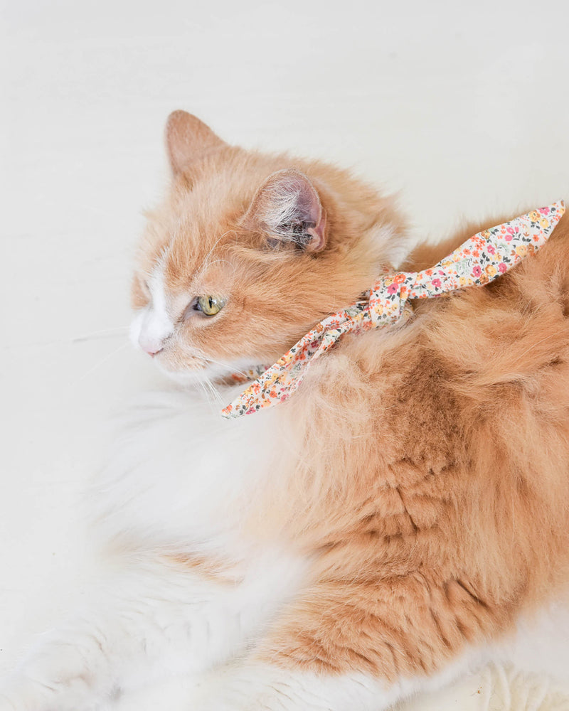 Floral necktie for dogs and cat. Like a rolled bandana but less fuss. Necktie on fluffy cat.
