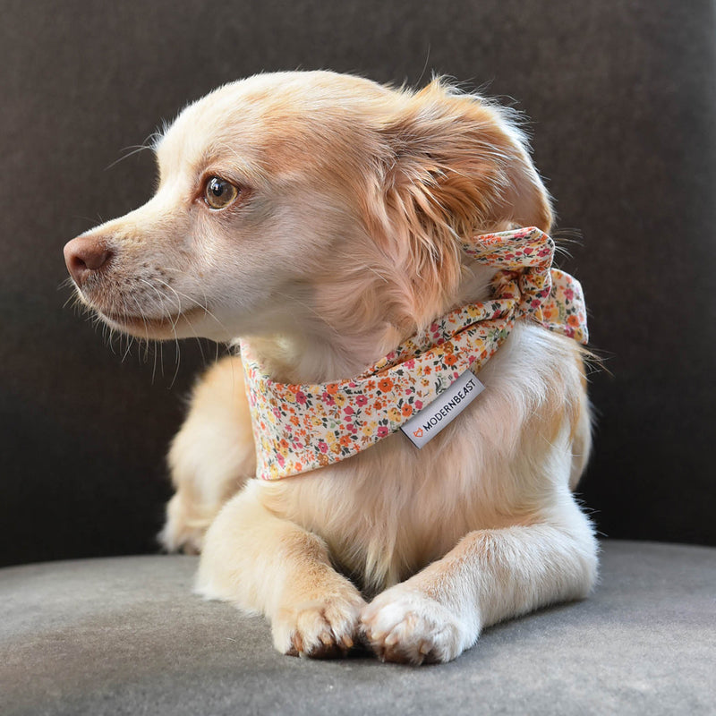 Floral bandana for cats and dogs. pre-folded and offers longer ends to perfectly and easily tie. 100% Cotton