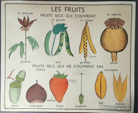 Vintage French School Poster Featuring Botanical Art