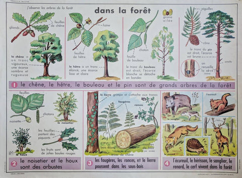 Vintage French School Botanical Poster With Flower Illustration