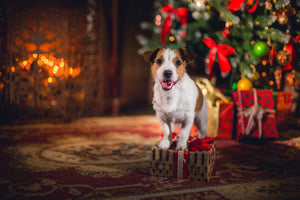 Holiday Gift Ideas for Pet Parents
