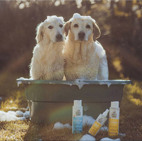 Probiotic Dog Shampoo and Conditioner
