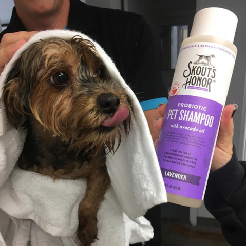 Topical Probiotics for Pets Skin Care