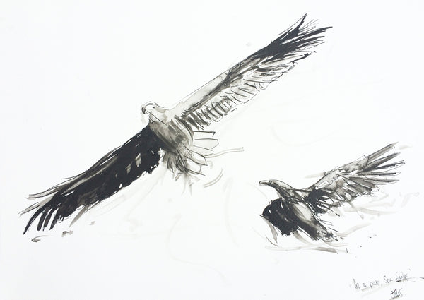 'In a Pair, Sea Eagles' - Wildlife Prints