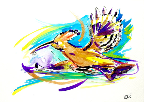 'Cat's Hoopoe Bird'