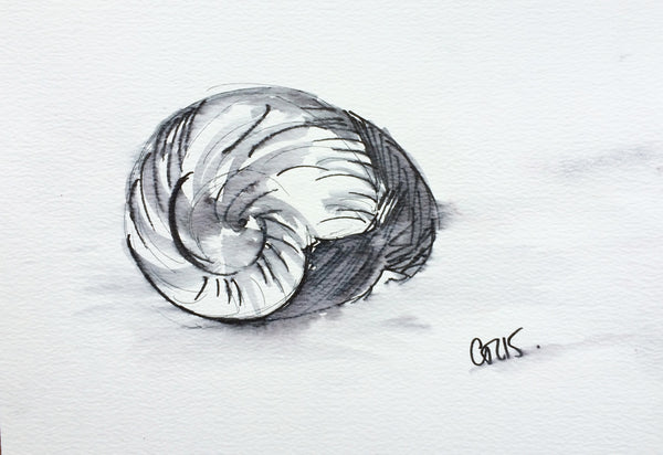 'Cornish Swirl Shell'