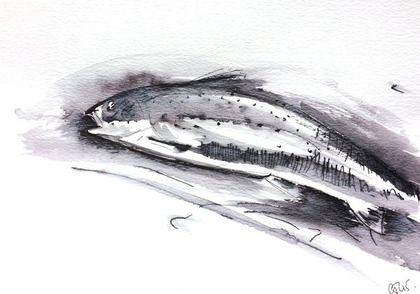 'Midnight Trout'