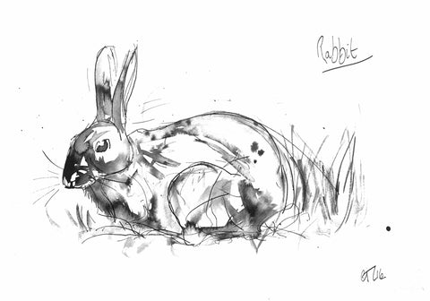 'Rabbit' - Wildlife Prints