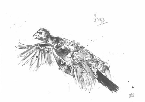 Grouse, Grouse Art, Flying Grouse, Grouse Drawing, Grouse Print, Grouse Artwork, Grouse Art, Grouse Painting, Wild Birds, Red Grouse, Grouse Moors, Hunting shooting fishing,  hunting shooting fishing art, bird art, grouse ink, Chloe art, Scottish art, Animal Art, Funny Grouse
