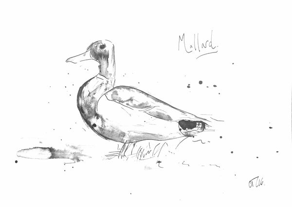'Mallard' - Wildlife Prints