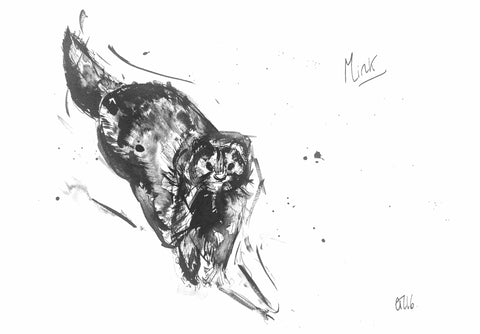 'Mink' - Wildlife Prints