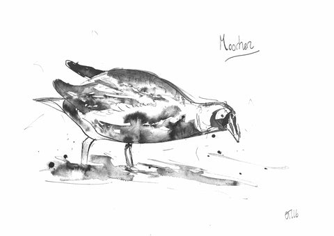 Moorhen, Moorhen drawing, moorhen print, moorhen art, moorhen ink, British birds, British bird art, bird art, moorhen illustration, moorhen description, Chloe art, Yorkshire animals, British birds, wading moorhen, animal drawings, buy moorhen, moorhen painting, wading moorhen art, animal art, wild art, bird art