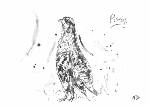 Partridge, Partridge art, partridge print, partridge painting, partridge gift, partridge in a pear tree, partridge painting, bird partridge, grey partridge, Chloe drawing, Chloe ink, wild art, wild artist, bird art, hunting shooting fishing present, animal art, wild art, funny partridge,