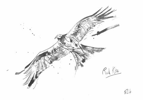 Red Kite, Red Kite Flying, Red Kite drawing, Red Kite Painting, Red Kite Art, Red Kite Gift, Red Kite Illustration, Red Kite, Kite Art, Red Kite Ink, Red Kite Art Print, Red kite Print, Bird Watching Art, animal art, bird prints, bird artists, bird art inspiration, bird art fan, best twitcher art, animal art, wild art