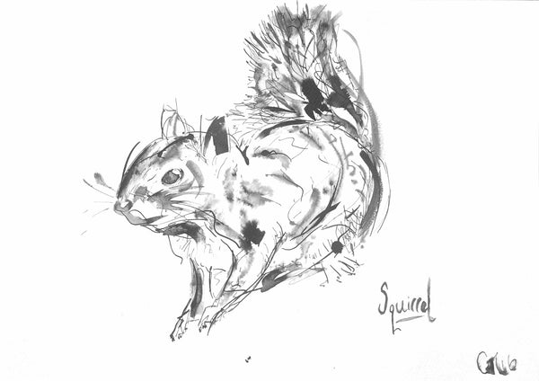 'Red Squirrel' - Wildlife Prints