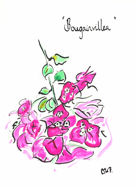Bougainvillea, Bougainvillea Print, Floral Art, Botanical Art, Botanics, Botanical Print, Pink Flower, Chloe Art, Chloe Gallery, Chloe Gallery UK, Partridges of London, Partridges, Chelsea, Top Drawer, bougainvillea art, bougainvillea painting, bougainvillea gift