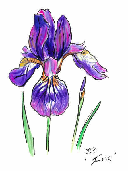 'Iris' - from the Botanics of Lunatic Lane
