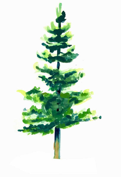 Douglas Fir, Christmas Card, Xmas Card, Xmas Tree, Christmas Tree