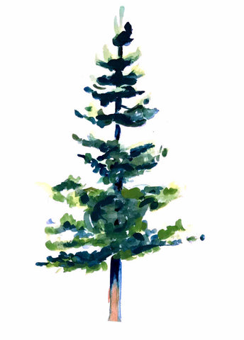Christmas Card, Christmas Tree, Douglas Fir, Xmas Card
