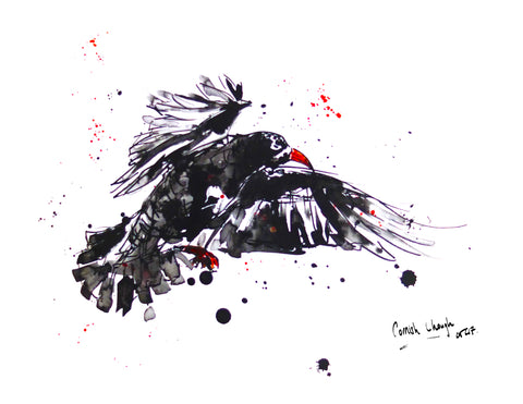 Cornish Chough, Chloë Tinsley Art, Chloë Art, Inspiring Art Cornwall, Prints and Cards, Chough Art, Chough Hunting, Chough Bird, Bird Ink, Cornish Rare, Cornish Wildlife, Cornish Artists Prints, Red Beak, Cornish Symbol, Mate for Life, Breeding Pairs, Successful Chough Breeding, Secret Chough, Love Choughs, Cornish Birds, Bird Spotting Cornwall, Cliff Birds, Choughs and Beetles, Chough Hunting, Chough Bird, Wildlife Conservation Cornwall, Firebird, office wall art, family wall art, bird wall art, animal art