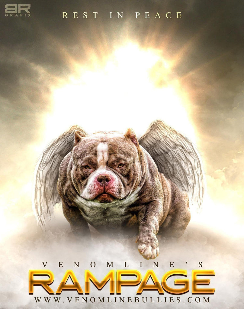 "TRAGEDY STRIKES: REMEMBERING AMERICAN BULLY VENOMLINE'S RAMPAGE ""GEORGE"" REST IN PEACE-Venomline 