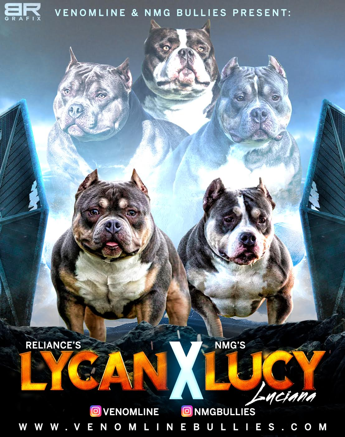 Reliance's Chumper, Lucky Luciano, Venomline, pocket bully, american bully, tri color, puppies, for sale