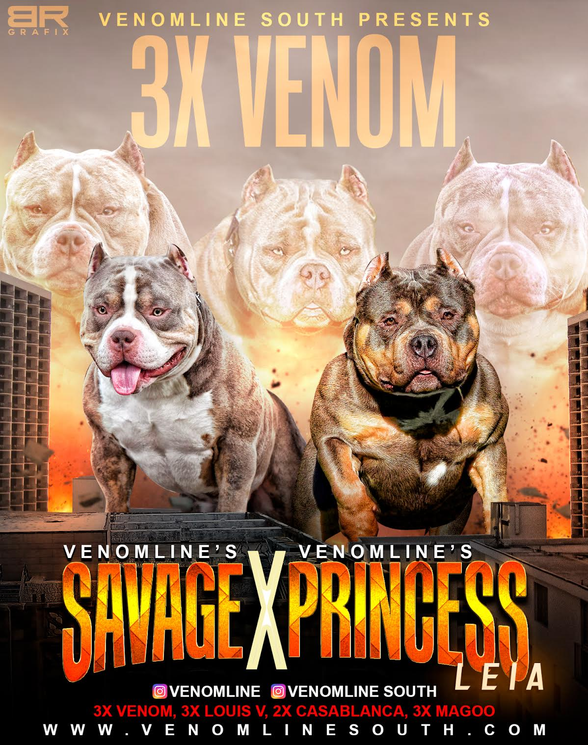 American bully puppies, american bully puppies for sale, Venomline, pocket bully, tri color, extreme, bully kennels, breeders, puppies, for sale