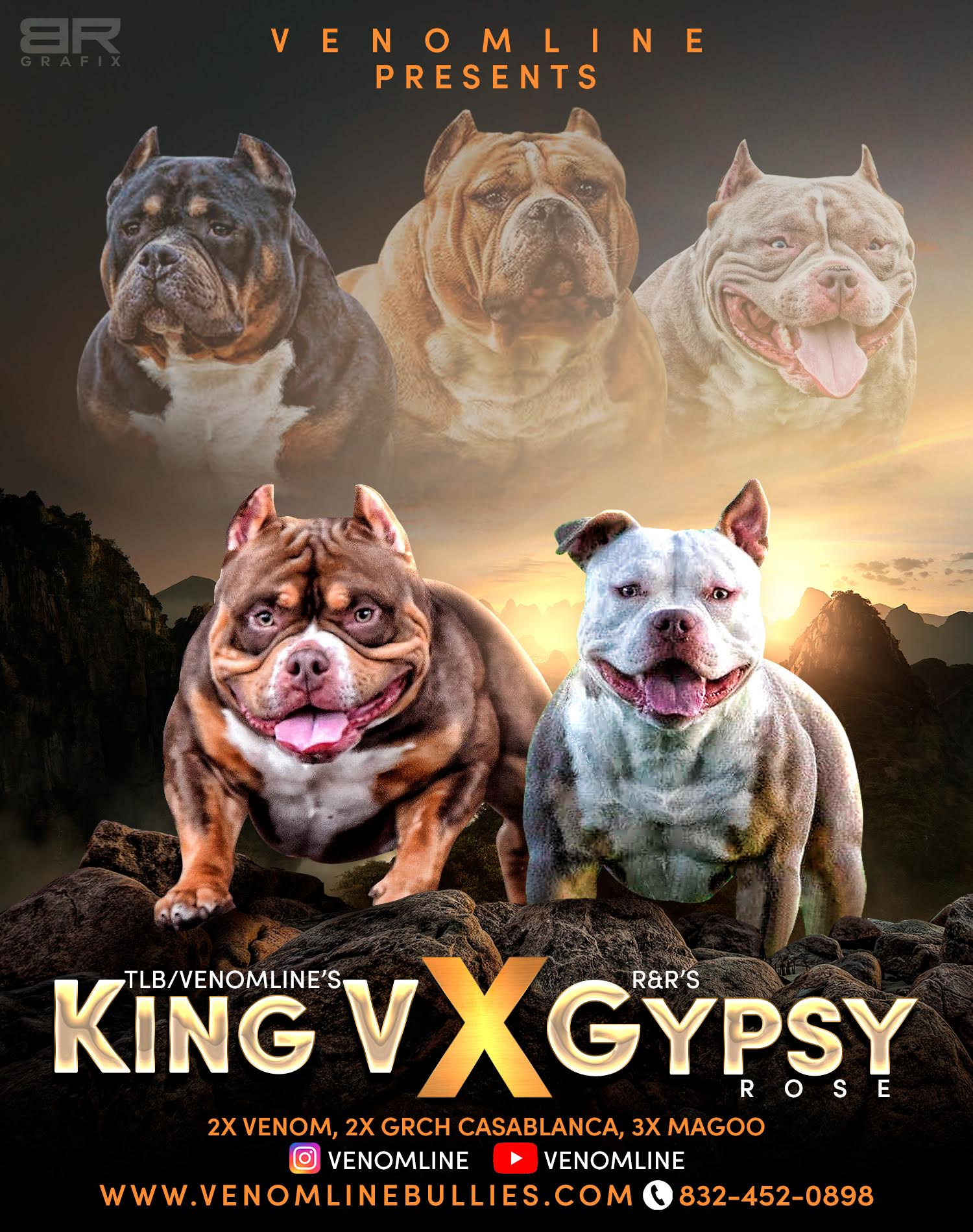 American Bully Breeders, Pocket Bully Kennel, Bully King Magazine, ABKC Champions, Pocket Bully Stud Service, American Bully Studs, Top Pocket Bully, Extreme Pocket Bully