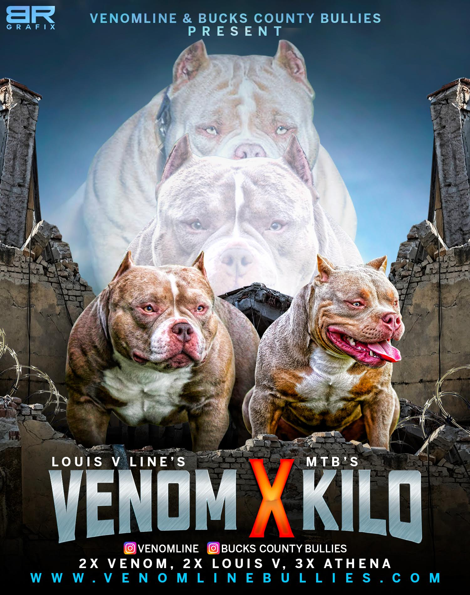 American Bully Kennels, Pocket Bully Kennels, Pocket Bully Breeders, Pocket Bully Kennels, Best Pocket Bully Breeders, Best Pocket Bully Kennels, Top Pocket Bully Studs, Venomline, ABKC Champions, Pocket American Bully, Pocket Bully, Micro Bully, Extreme Bully, Exotic Bully, Puppies for Sale