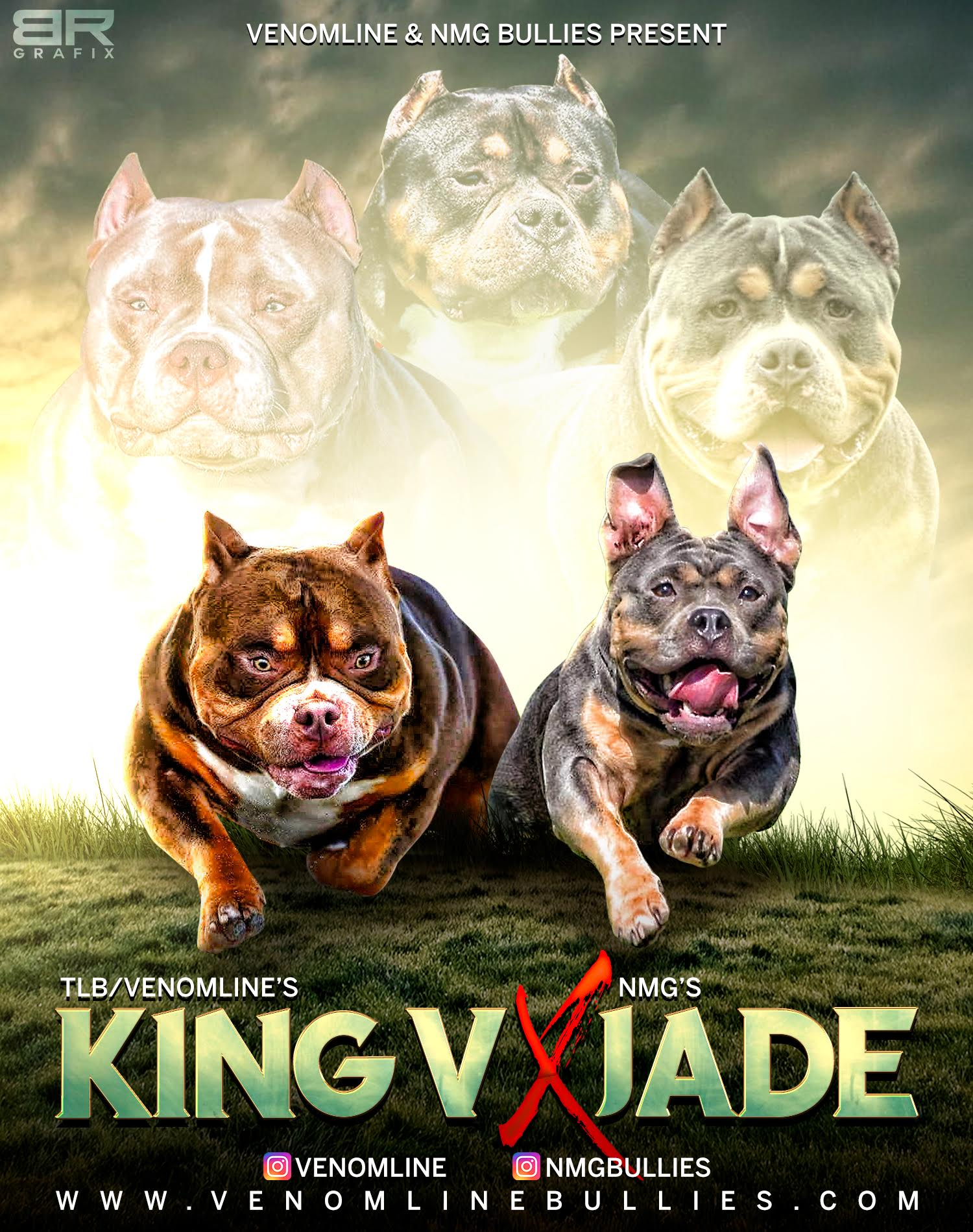 American Bully Breeders, American Bully Kennels, Pocket Bully Kennels, Pocket Bully Breeders, Pocket Bully Kennels, Best Pocket Bully Breeders, Best Pocket Bully Kennels, Top Pocket Bully Studs, Venomline, Pocket American Bully, Puppies for Sale