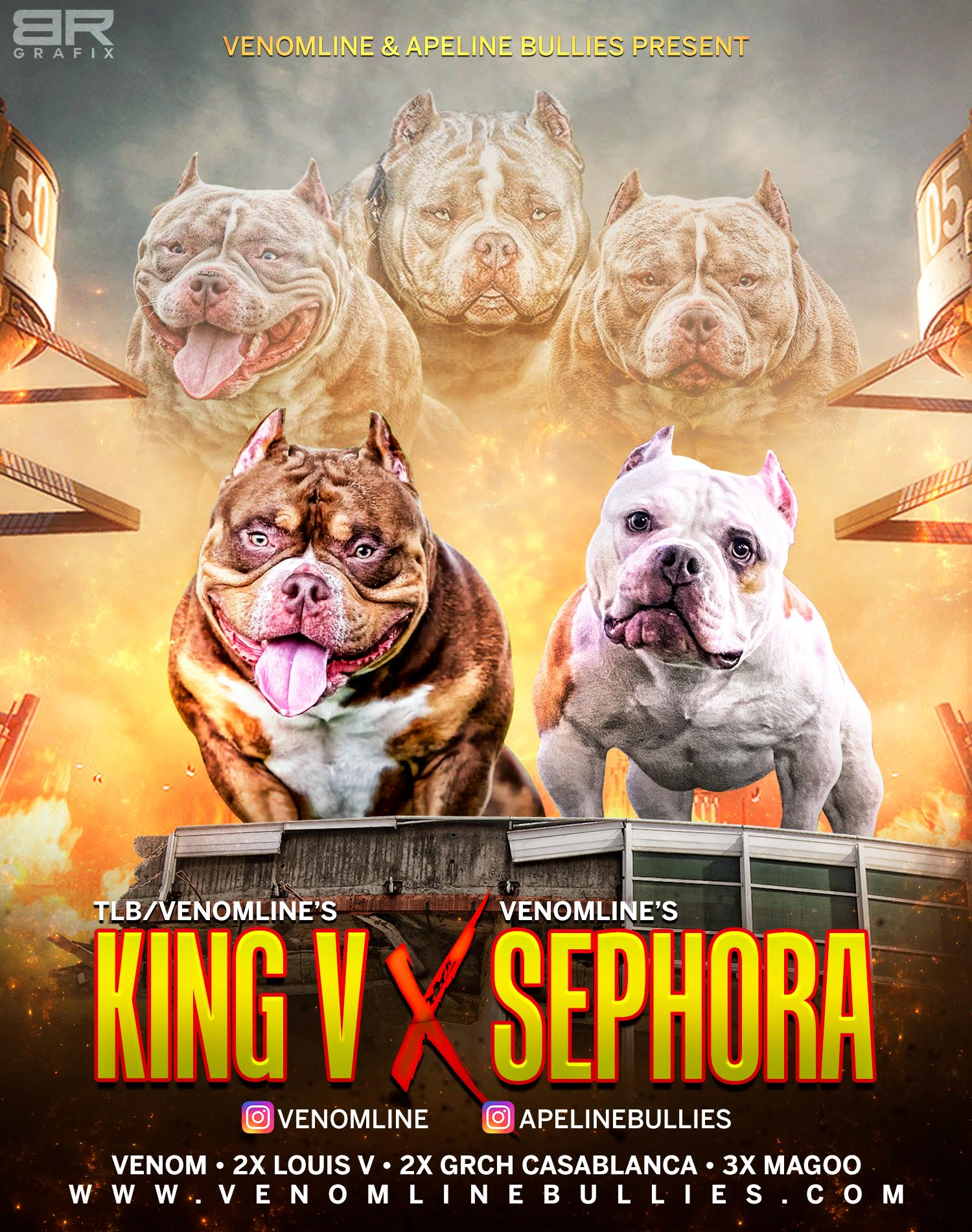 Top American Bully Breeders, American Bully Kennels, Pocket Bully Kennels, Pocket Bully Breeders, Pocket Bully Kennels, Best Pocket Bully Breeders, Best Pocket Bully Kennels, Top Pocket Bully Studs, Venomline, Pocket American Bully, Puppies for Sale, Micro, Extreme, Pocket, Tri Color, Bullys